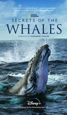 Тайны китов